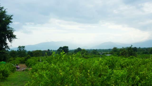 vídeos de stock e filmes b-roll de lemon garden mountain and cloud in chaingmai, thailand. - casca de fruta
