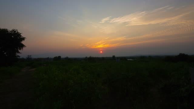 lemon plantation landscape sunset