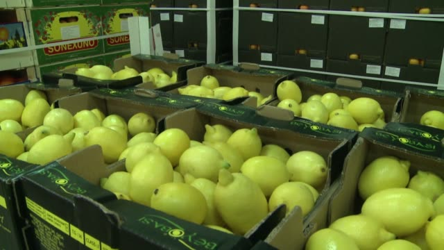 lemons on wholesale - compartment stock videos & royalty-free footage