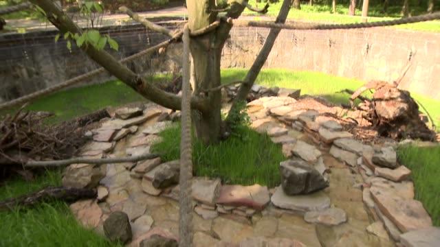 lemur enclosure - enclosure stock videos & royalty-free footage