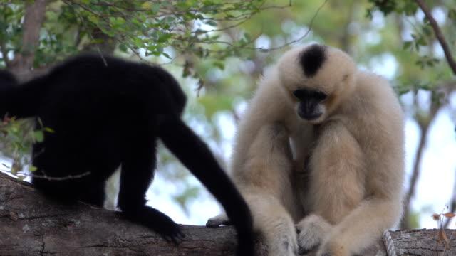 木の上のキツネザル - 捕らえられた動物点の映像素材/bロール