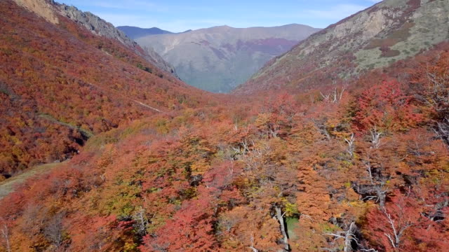 Lenga Beech in Fall - Cerro Catedral, Bariloche, Argentina