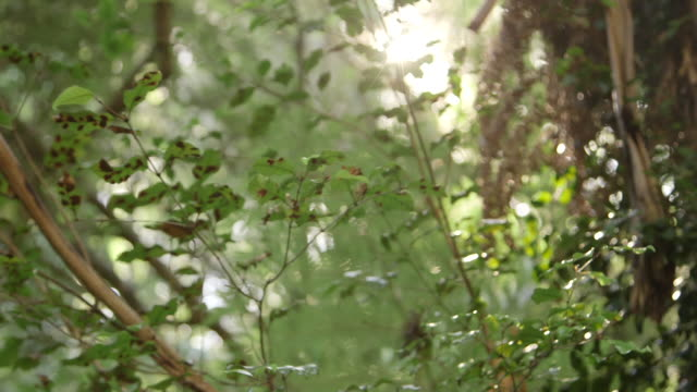 Lens flare in New Zealand foliage