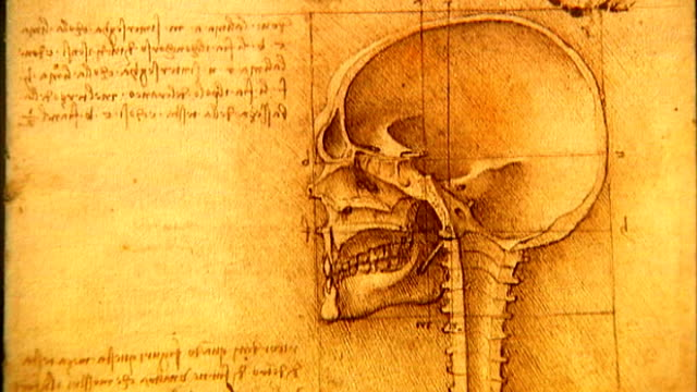 Leonardo Da Vinci anatomical drawings exhibition at Queen's Gallery ENGLAND London Buckingham Palace Queen's Gallery Elizabethan period music**...
