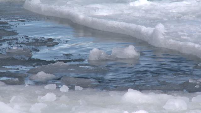 leopard seal (hydrurga leptonyx) at surface of ice hole, cape washington, antarctica - アザラシ点の映像素材/bロール
