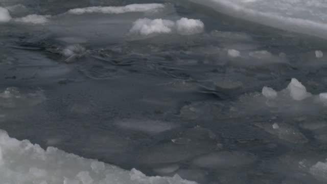 leopard seal (hydrurga leptonyx) at surface of ice hole, dives, cape washington, antarctica - cape washington stock videos & royalty-free footage