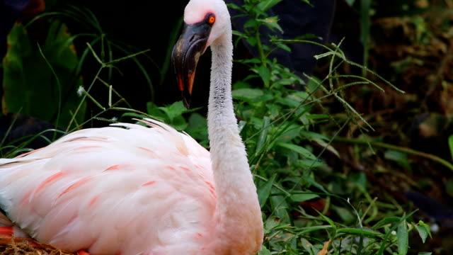 vídeos y material grabado en eventos de stock de menor cerca de flamingo - boca de animal