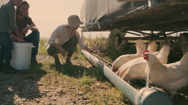 vídeos de stock, filmes e b-roll de vamos nos alimentar. - animal de fazenda