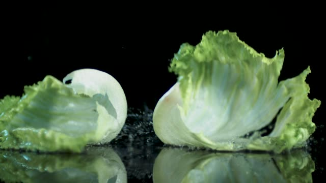lettuce all be healthy - lettuce stock videos & royalty-free footage