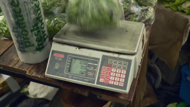 cu lettuce in plastic bag placed on scale / burlington, vermont, usa  - burlington vermont stock videos & royalty-free footage