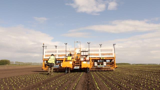 lettuce planting machine working in a field - lavoratore emigrante video stock e b–roll