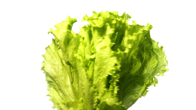 lettuce salad spinning and rotating isolated on white background suspended in the air - lettuce stock videos & royalty-free footage