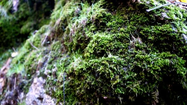 苔とシダの岩の上 - 地衣類点の映像素材/bロール
