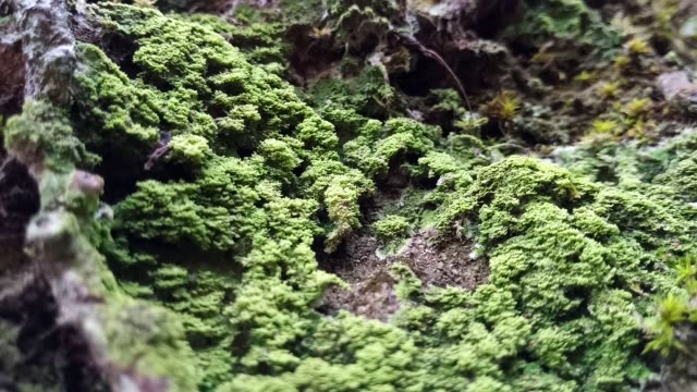 lichen and moss on tree - plant bark stock videos & royalty-free footage