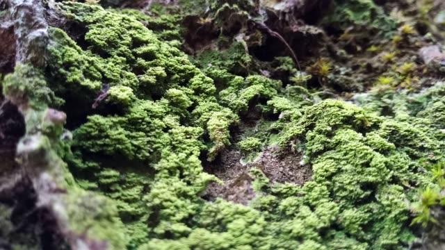 樹上の苔と苔