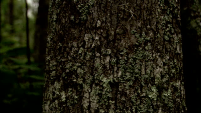 lichen and spanish moss cling to trees in a forest. available in hd. - 地衣類点の映像素材/bロール