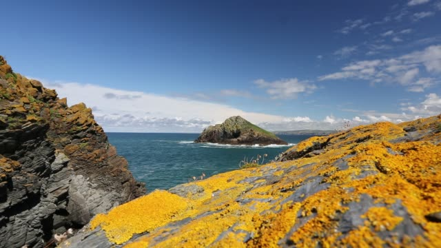 Lichen covered rocks on Rumps Point near Polzeath, Cornwall, UK.
