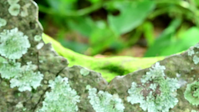 lichen, moss, and higher plant zooming - muschio flora video stock e b–roll