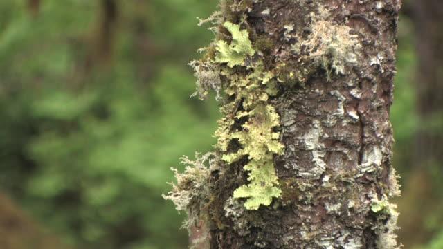 cu, lichen on side of tree, glacier bay national park and preserve, alaska, usa - 地衣類点の映像素材/bロール