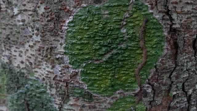 lichen on tree - plant bark stock videos and b-roll footage