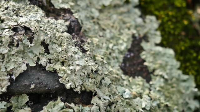 lichens on a piece of wood - 地衣類点の映像素材/bロール