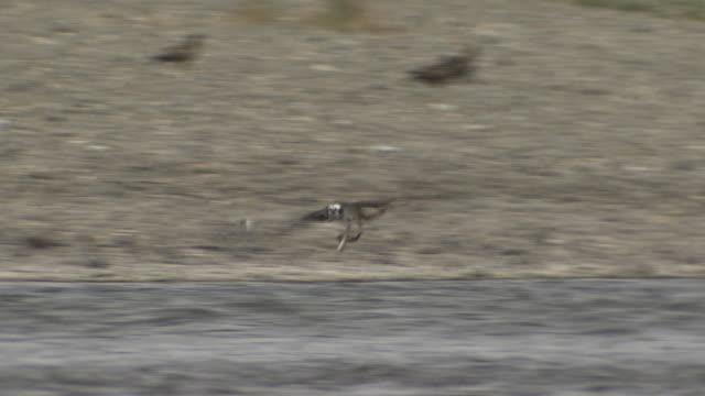 life at shimantogawa river, kochi, japan - osprey stock videos & royalty-free footage