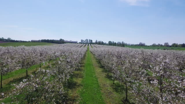 life - blooming trees - orchard stock videos and b-roll footage