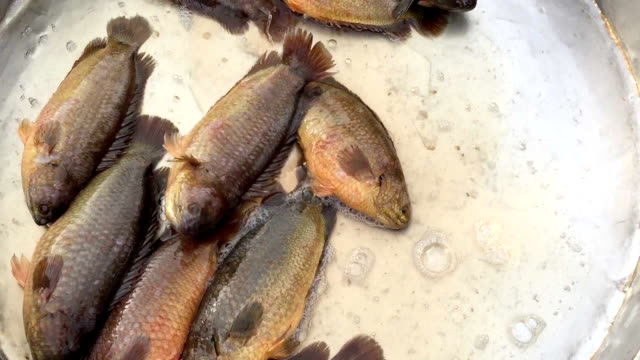 life climbing perch fish sell in market - perch fish stock videos and b-roll footage