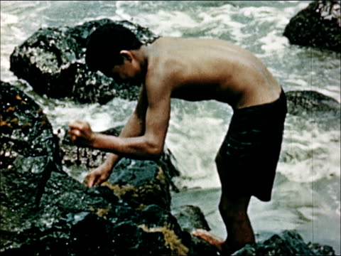 1950 life in hawaii - seaweed stock videos & royalty-free footage