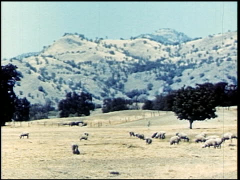 life in the central valley of california - 3 of 10 - life in the central valley of california filmtitel stock-videos und b-roll-filmmaterial