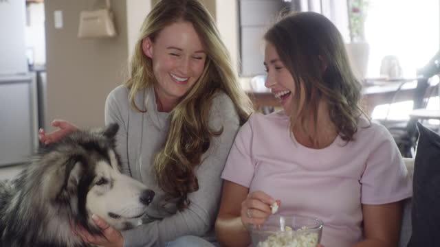 人生は良いですが、犬との生活はさらに良いです - ナイトイン点の映像素材/bロール