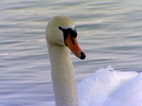 stockvideo's en b-roll-footage met life of waterfowls. - dierlijke mond