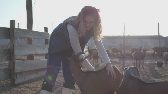 ヤギ農場での生活 - シェーブルチーズ点の映像素材/bロール