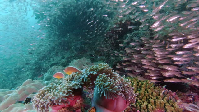 life on the coral reef in good condition 4k - good condition stock videos & royalty-free footage