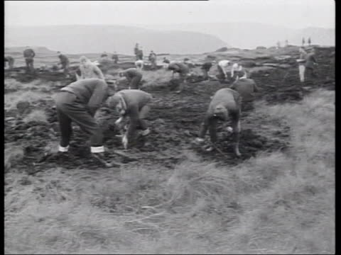 vídeos y material grabado en eventos de stock de tariff judgement; lib yorkshire: saddleworth moor: ext b/w people digging on moors in hunt for victims of hindley and ian brady - erial