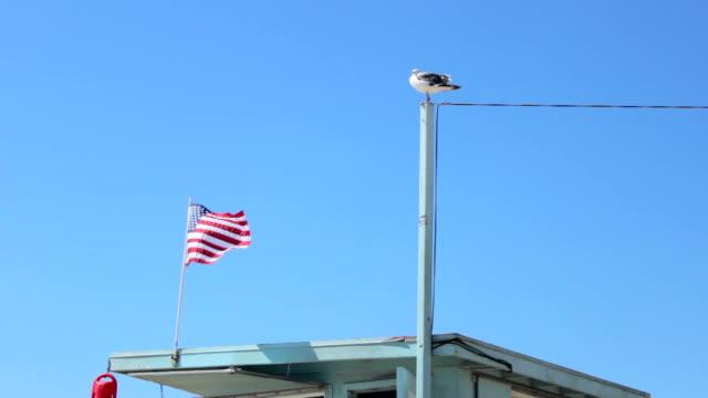 vidéos et rushes de cabane de sauveteur avec une mouette - drapeau américain