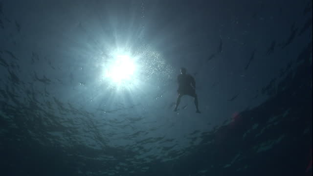a lifeless corpse floats in the red sea below bright sunlight. - dead person stock videos & royalty-free footage