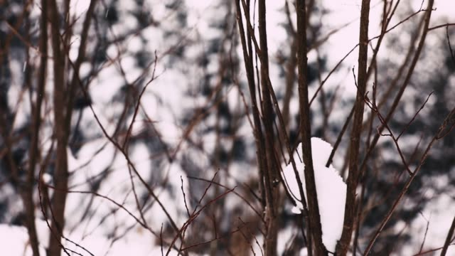 lifeless twigs under the heavy snowfall - bush stock videos & royalty-free footage
