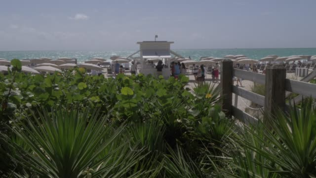 Lifting shot from flora to beach on Miami Beach, South Beach, Miami, Florida, United States of America, North America