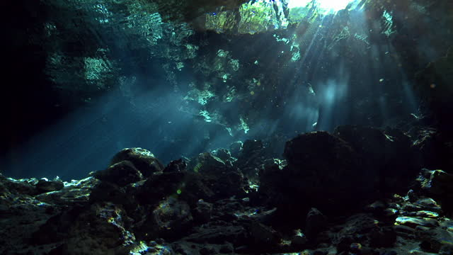 light beams in water of cenote entrance, yucatan - group of animals stock videos & royalty-free footage