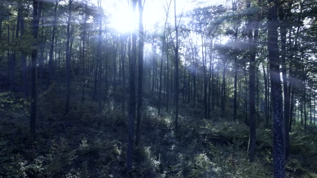 light beams shining through spooky forest trees. mystic woodland scenery