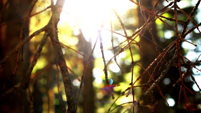 Ljusstrålar genom trädgrenar i en skog vid solnedgången