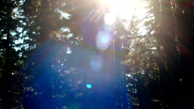 light beams trhrough misty trees in a forest at sunset - solar flare stock videos and b-roll footage