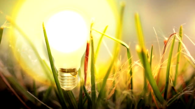 Light Bulb lights up in Grass. HD, NTSC, PAL