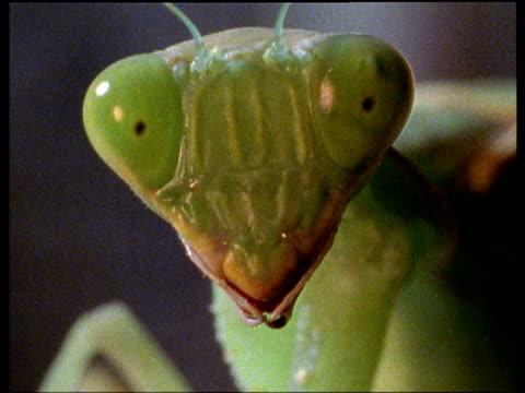 vídeos de stock, filmes e b-roll de light flashes on praying mantis, eyes glow - medo