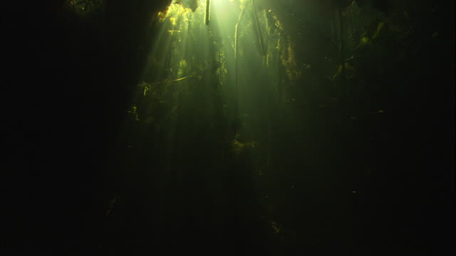 Light from the surface filters through seaweed and plants on a riverbed. Available in HD.