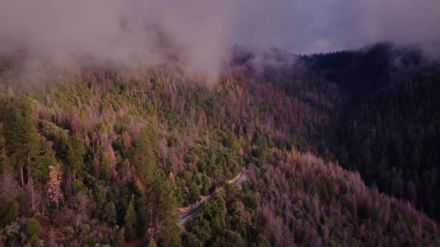 light mist blowing over forested hillside and twisting road - aerial shot - sequoia stock videos and b-roll footage