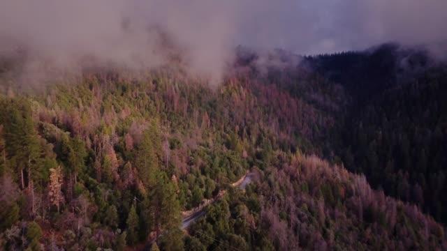 vidéos et rushes de brume légère souffle sur la colline boisée et torsion road - prise de vue aérienne - parc national