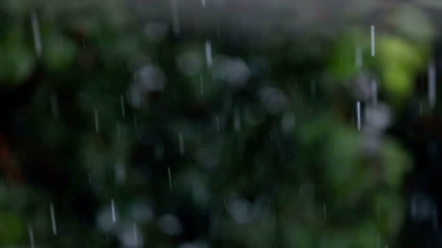 light rain - trees on backgorund - rainforest stock videos & royalty-free footage