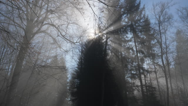 Light rays in a forest in Switzerland